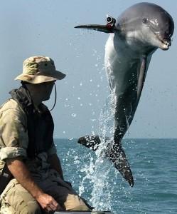 Бойни делфини от подразделение на ВМФ на САЩ.