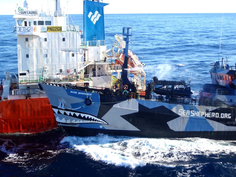 Sea Shepherd vessel Bob Barker collides with the fuel tanker ship Sun Laurel as Japanese mother survey ship Nissin Maru tries to pull alongside in the Antarctica