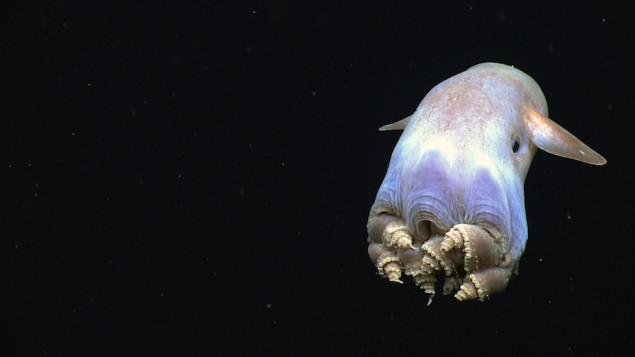 NOAA Ocean Explorer: NOAA Ship Okeanos Explorer: Gulf of Mexico 2014