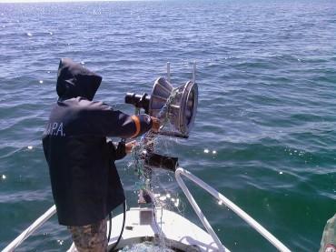 Над 43 тона е квотата за улов на калкан през тази година в българската акватория на Черно море