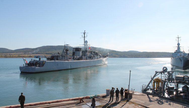 fregata-drazki
